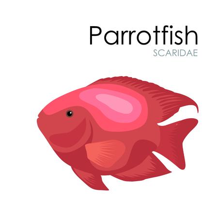 parrotfish: Cute Aquarium fish Parrotfish vector illustration isolated on white background. vector illustration icon. Fish flat style vector illustration. Fish icons isolated. Tropical fish, sea fish, aquarium fish set isolated on white background. Sea color flat des