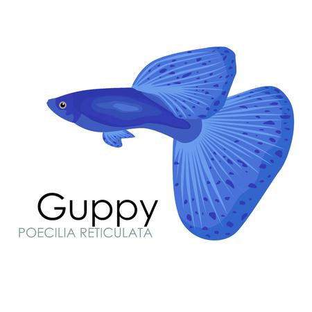 Leuk Aquarium vissen Guppy vector illustratie op een witte achtergrond. vector illustratie pictogram. Vissen vlak stijl vector illustratie. Fish iconen. Tropische vissen, zee vissen, aquariumvissen set geïsoleerd op een witte achtergrond. Sea kleur plat ontwerp f