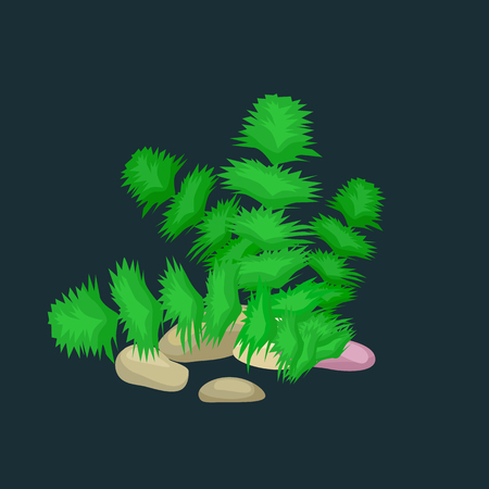 flora fauna: Seaweed, solated colorful corals and algae on a dark background. Vector underwater flora and fauna.