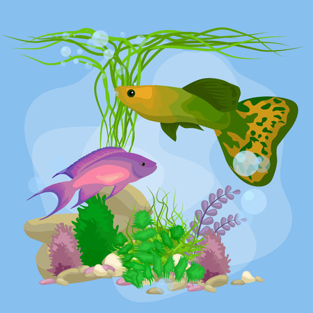 guppy: Underwater vector world background with fish, seaweed and bubbles, illustration Illustration