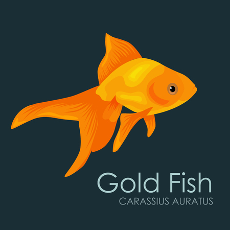 Aquarium fish Gold Fish, vector illustration isolated on dark background. Fish flat style vector illustration.