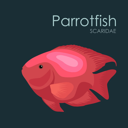 parrotfish: Aquarium fish Parrotfish, vector illustration isolated on dark background. Fish flat style vector illustration.