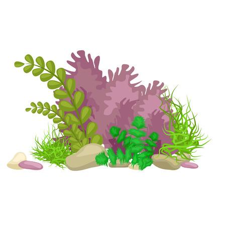 Zeewier, solated kleurrijke koralen en algen op een witte achtergrond. Vector onderwater flora en fauna. Stock Illustratie