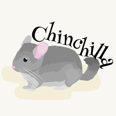 evaluable: Pets, Gray chinchilla, domestic animals vector illustration on a white background Illustration