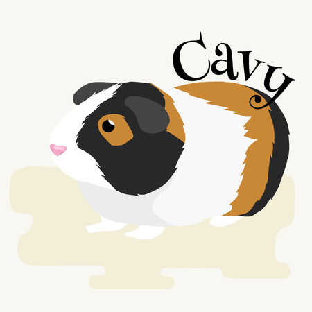 guinea pig: Happy Pets, home animals guinea pig on the white background vector illustration Illustration