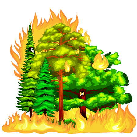 fire damage: Forest Fire, fire in forest landscape damage, nature ecology disaster, hot burning trees, danger forest fire flame with smoke, blaze wood background vector illustration. Wildfire burning tree in red and orange color.