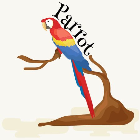 beak: Domestic animal,isolated macaw parrot with beak and wings, pets background, tropical bird on white vector illustration pictograms