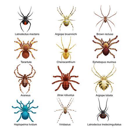 arañas planos de dibujos animados símbolos de miedo y arañas insecto diseño plano. Conjunto de iconos ilustración vectorial de color arañas planos de dibujos animados aislado en el fondo blanco. vector de araña. iconos de araña aislaron