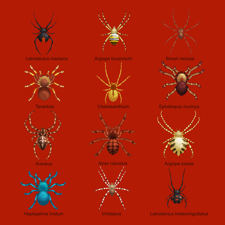 black widow: Flat spiders cartoon scary symbols and spiders insect flat design. Set of flat spiders cartoon colored icons vector illustration isolated on white background. Spider vector. Spider icons isolated