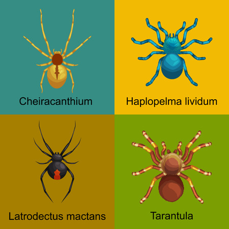 latrodectus: Flat spiders cartoon scary symbols and spiders insect flat design. Set of flat spiders cartoon colored icons vector illustration isolated on white background. Spider vector. Spider icons isolated
