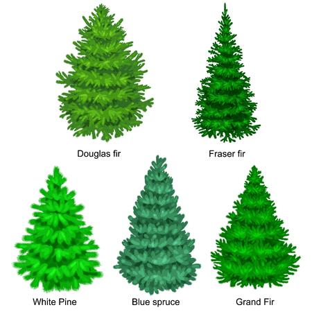 evergreen tree: Set of christmas vector tree like fir or pine Blue spruce for New year celebration without holiday decoration, evergreen xmas plants.