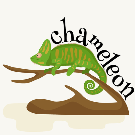 yemen: pet chameleon for home, lizard and reptile isolated vector illustration pictograms