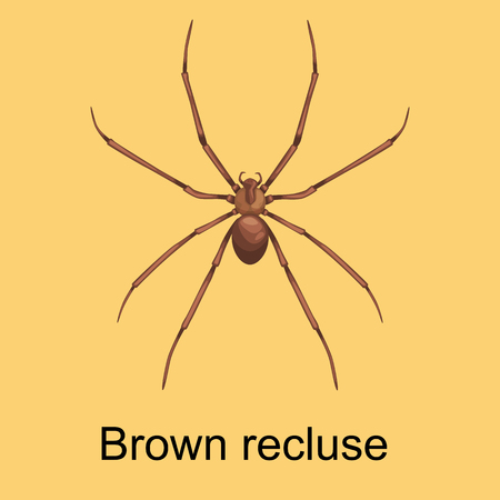 loxosceles: Spiders cartoon set, dangerous insects collection