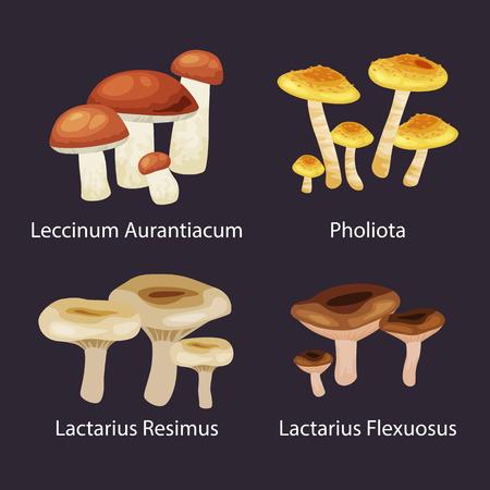Vector izolowane jadalnych naturalnych grzybów w zestawie przyrody, organicznych żywności roślinnej zbiór ilustracji, lasu.