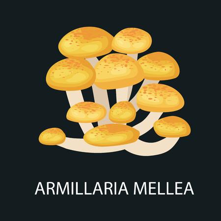 fungi: Armillaria mellea isolated, Wild Foraged Mushroom, Vector  edible natural mushrooms in nature set, organic vegetable food collection