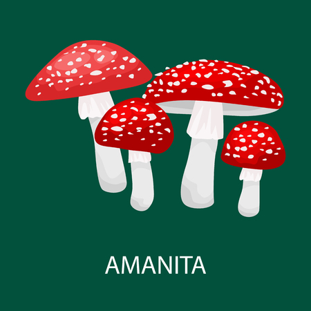 Amanita muscaria, a poisonous mushroom in  forest. Wild Foraged , Vector isolated edible natural mushrooms in nature set