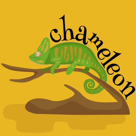 chamaeleo: pet chameleon for home, lizard and reptile isolated vector pictograms