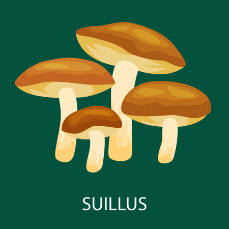Edible mushroom Suillus luteus isolated, Wild Foraged , Vector   natural mushrooms in nature set, organic vegetable food collection
