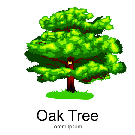Cartoon isolated oak summer tree on a white background icon, outdoor park with branch, leafs on green grass vector illustration