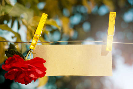 Card with red rose fixed by clothespin to the rope photo