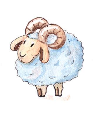 Cute sheep photo