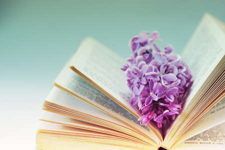 Vintage romantic background with old book, lilac flower, and little seashell