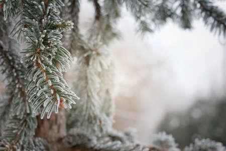 Weihnachten, Winter Hintergrund mit frostigen Kiefer. Makroaufnahme Standard-Bild - 47563636