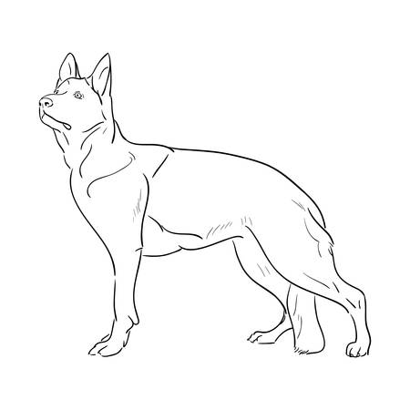 german shepherd: Hand drawn German Shepherd dog.  vector illustration
