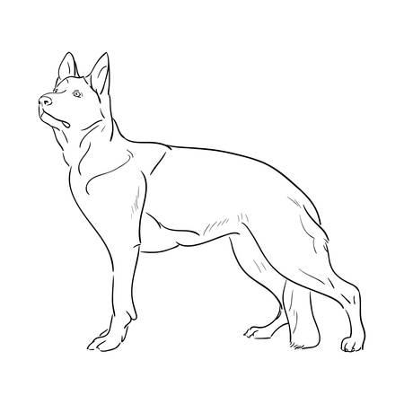 Hand drawn German Shepherd dog.  vector illustration