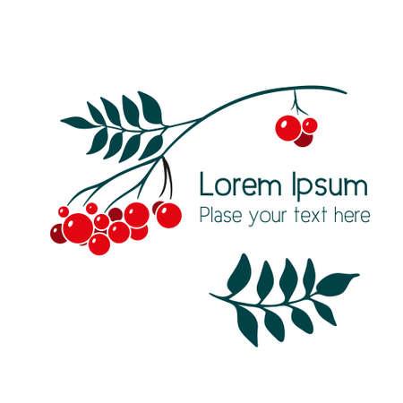 Rowan branch with berries. Simple vector illustration 向量圖像