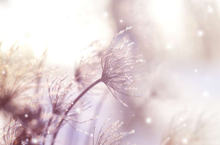 frozenned: Beautiful winter seasonal background with dry plants against sparkling bokeh Stock Photo