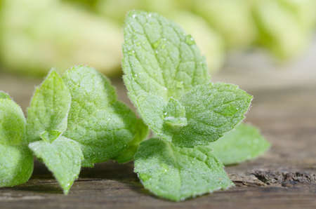Close up fresh green peppermint leaves. Mint herbs on vintage wooden table.