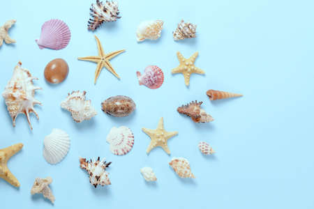 Plenty of different seashells on a blue background. Seaside themed backdrop for travel agency template advertising or postcard. Top view vintage toned still life.