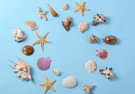 Kreatywny układ składa się z różnych kolorowe seashells i karty z pozdrowieniami na niebieskim tle. Minimalne tło stylu