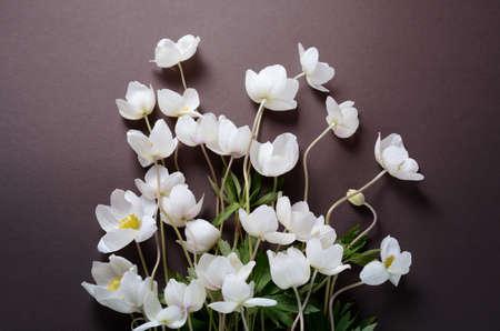 Creative top view layout with white anemone flowers on a black creative top view layout with white anemone flowers on a black background stylish minimalist background mightylinksfo