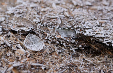 Abstract frozen background. Wooden texture in the hoar frost. Winter seasonal background. Stock Photo