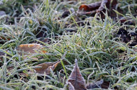 Autumn frozen green grass. Winter seasonal background.