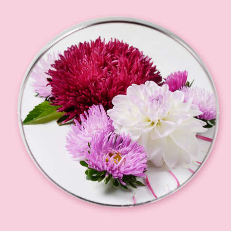 Creative background with chrysanthemum and dahlia flowers. Floral border flat lay concept Stock Photo