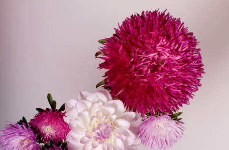 Creative background with chrysanthemum and dahlia flowers. Floral flat lay concept