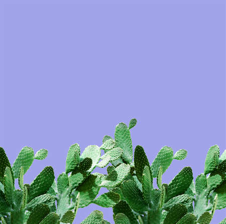 Opuntia cactus. Creative layout. Minimal style still life.