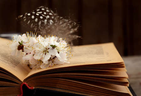 Vintage romantic background with old book, apricot flower, and little  feather