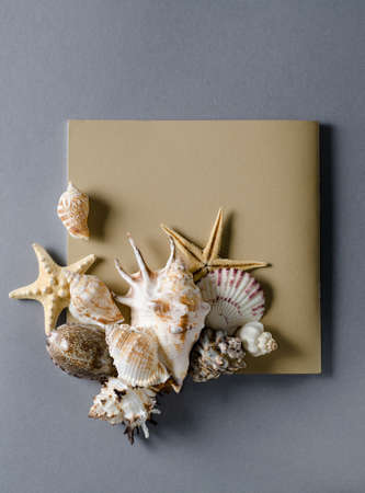 Collection of seashells with empty greeting card on a grey backdrop. Vacation summer flat lay Template.