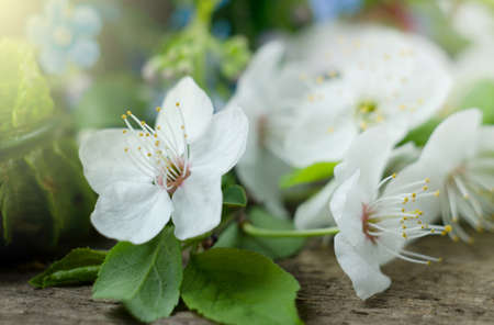 Close up apple tree flower on a wooden surface. Soft focused romantic template