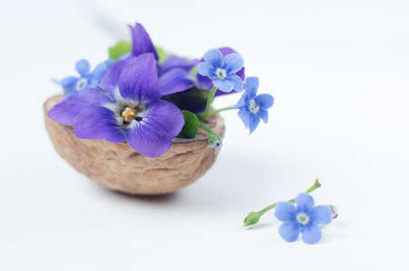 Floristic composition with violets and forget-me-not flowers in a nutshell against beautiful bokeh background.