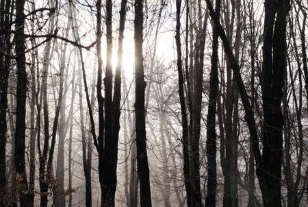 Soft sunlight in forest. Winter natural background.