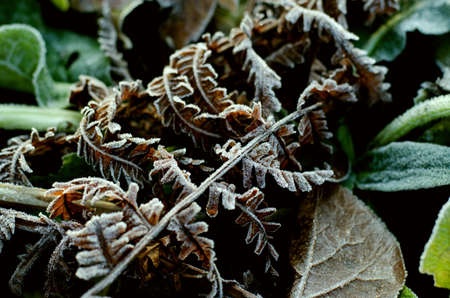 Dry Brown Fern Leaf in Frost glaze Stock Photo