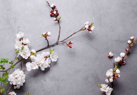 Spring flowers with branches blossoming apricots on grey background. Flat lay concept. Imagens