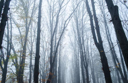 Fantastic Mysterious Foggy Morning in the Autumnal Forest. Moody Background with Trees. Fall seasonal background.