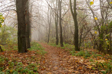 Fantastic Mysterious Foggy Morning in the Autumnal Forest. Moody Background with Colorful Trees. Fall seasonal background.