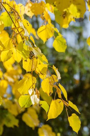 Bright autumn leaves under sunlight. Fall seasonal background Фото со стока